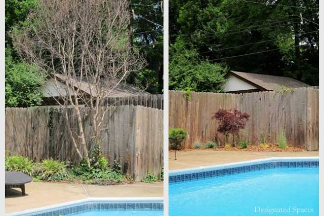 Poolside Landscape Before and After